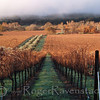 Winter at Olivina (horizontal) Livermore Wine Country Image I.D. #:  V-05-001