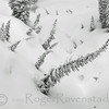 Snow Trees
