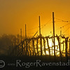Rising Vineyard